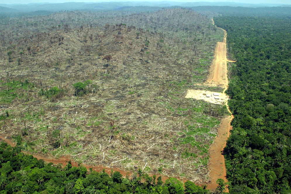 help stop deforestation Images - Frompo